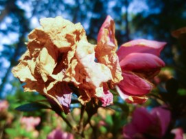 flowers sfa trail-5
