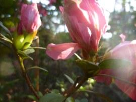 flowers sfa trail-6