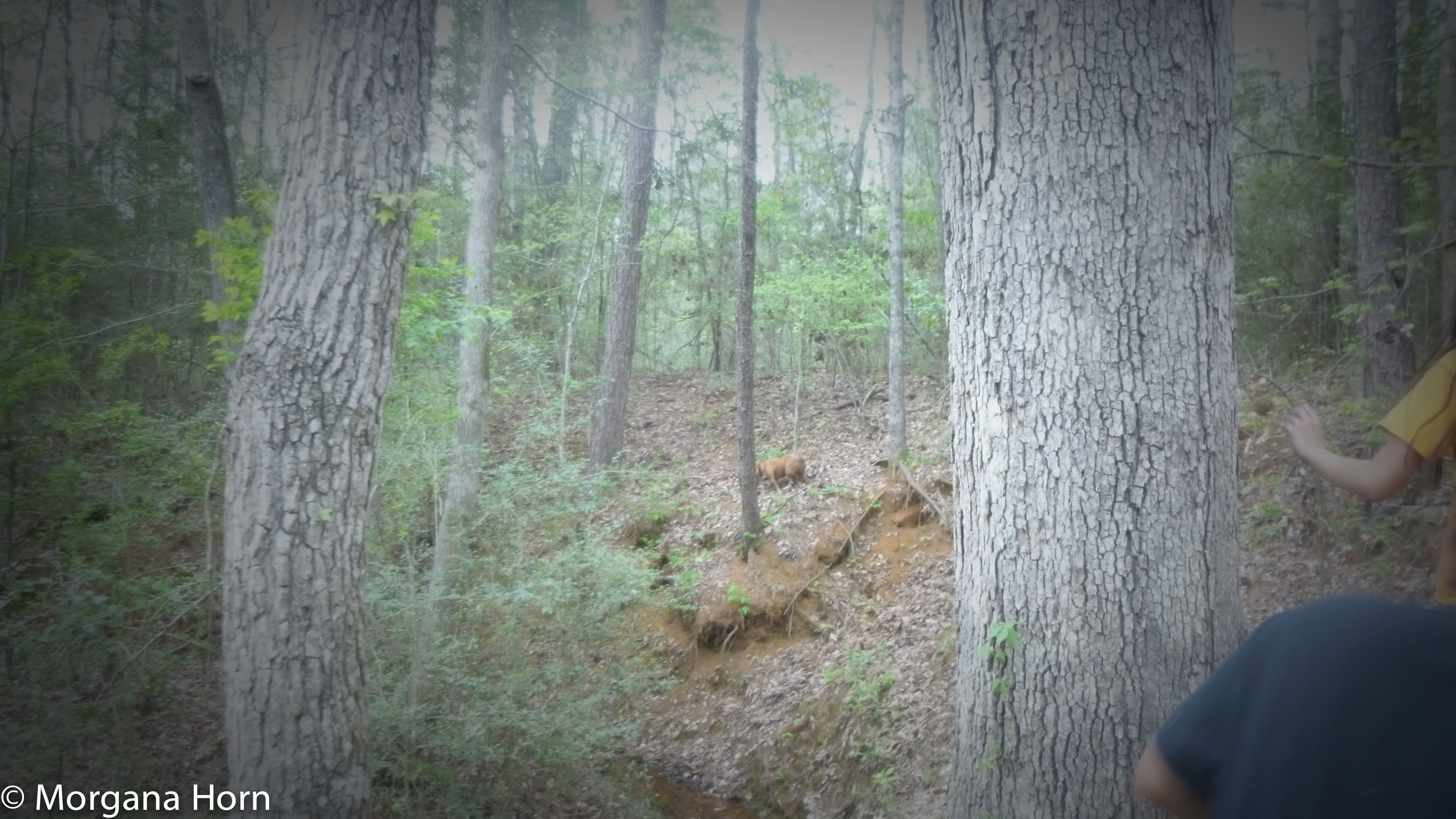 the woods-5