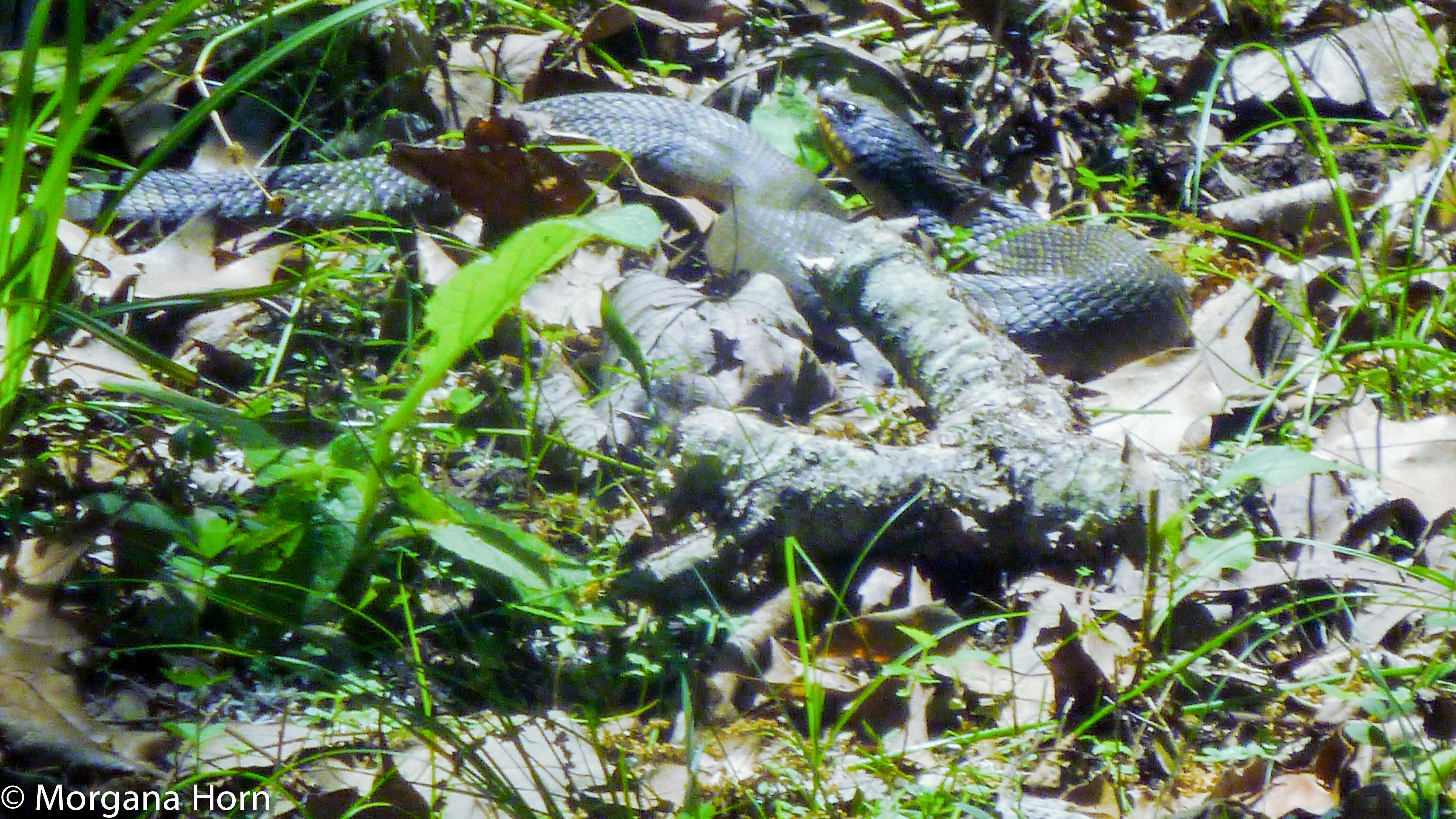 blue snake-2