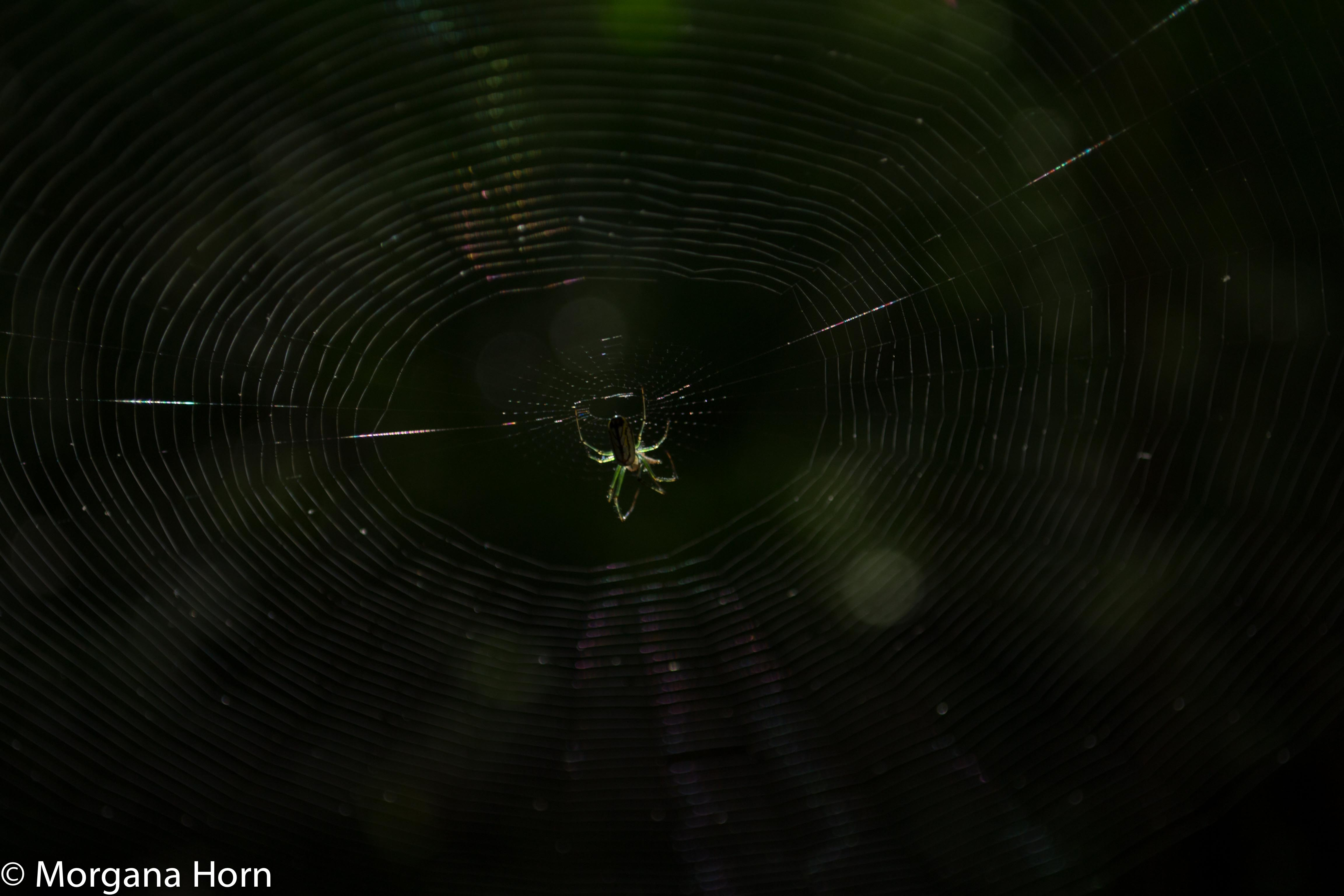 morning spider pic-1