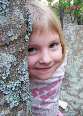 Maci in tree