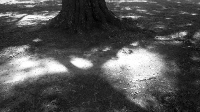 b&w shadow trees -2
